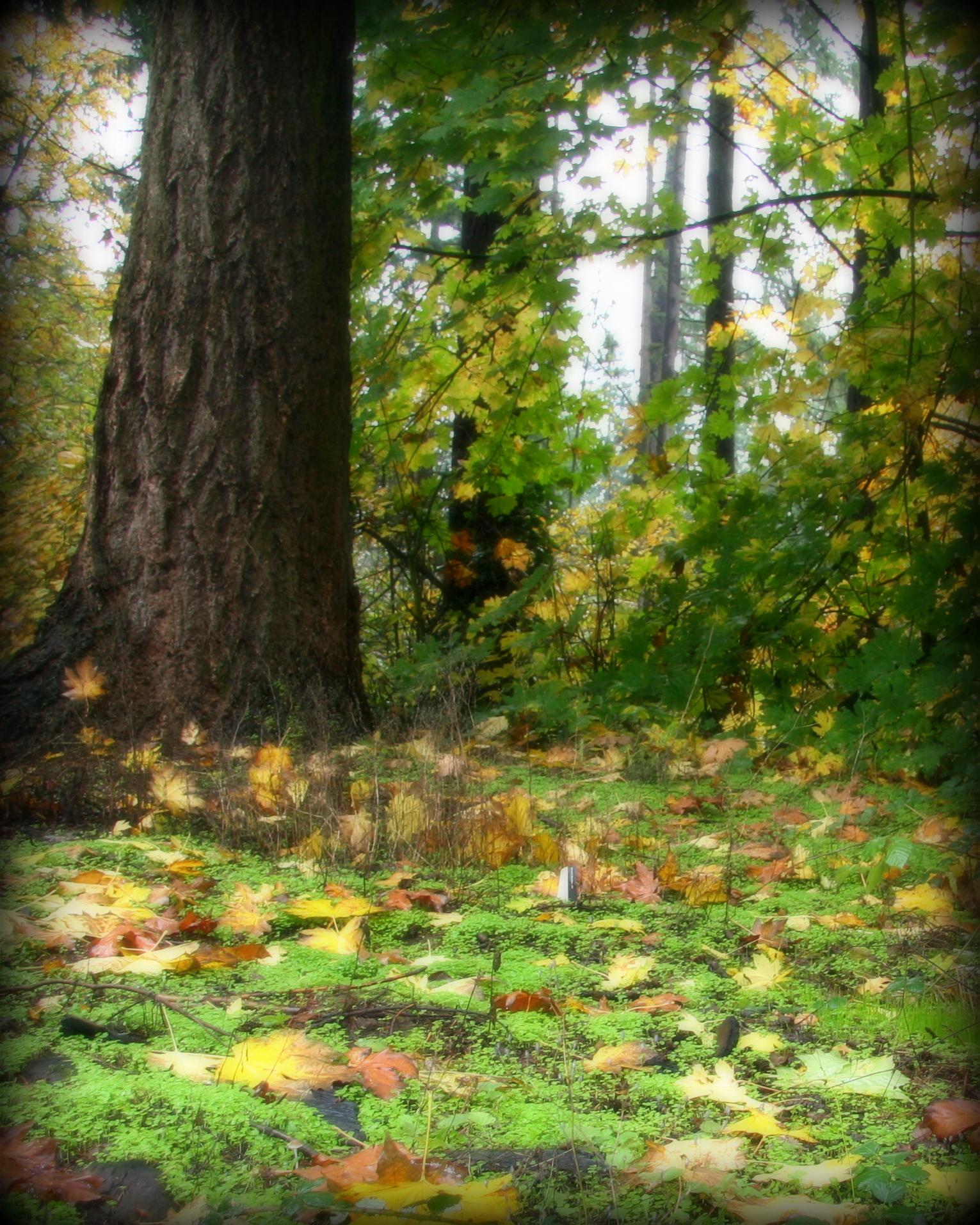 fall mushrooms 037